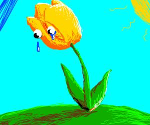sad yellow tulip crying