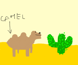 camel in desert next to a cactus