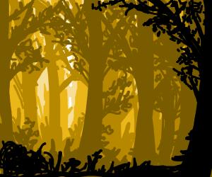 Light seeping through a forest