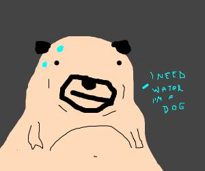 Dog need s water
