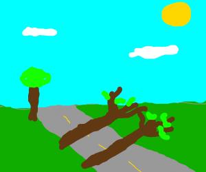 Two trees fallen on road
