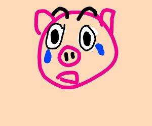 crying pig