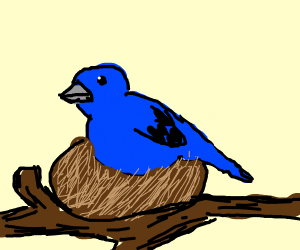 Bluebird in nest