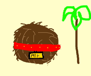 Pet Coconut