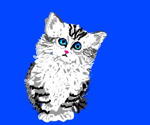 Cute watery-eyed cat