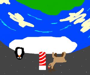 Confused reindeer