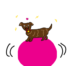 puppy walking on a ball