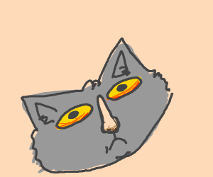 a grey cat with a human nose