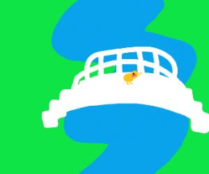Duck on bridge
