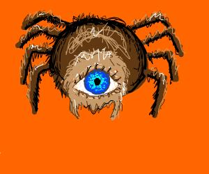 Eye spider