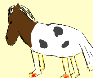 Rooster cow horse with subtle flame socks