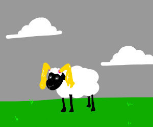 Sheep with pigtails