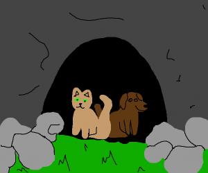 Pet Cave