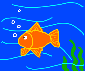 Orange fish in the water