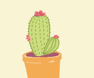 A Cactus In a Pot
