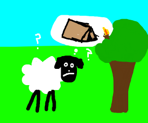 sheep finding a tent
