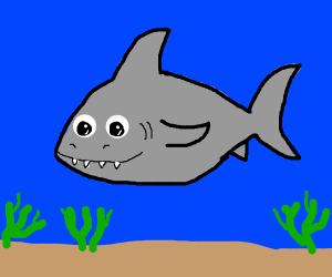 Kwai shark