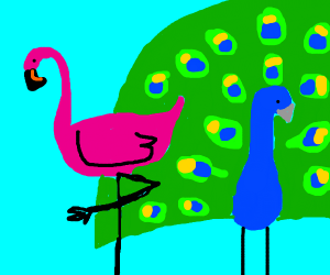 flamingo-peacock
