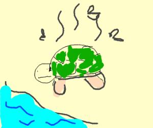 Stinky Turtle