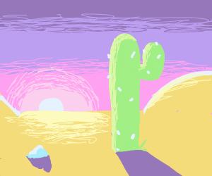 sunset in desert featuring cactus