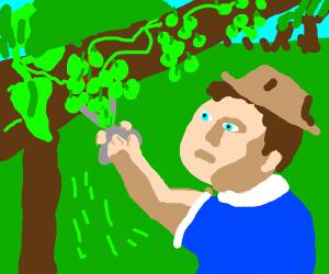 Grape gardener