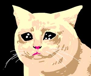 the sobbing cat meme
