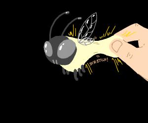 Stretchy Firefly