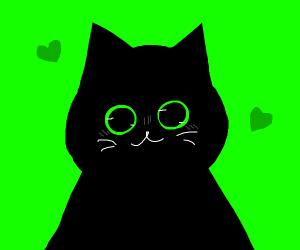 a very cute kitty