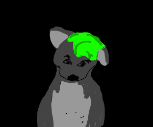 wolf covered with slime