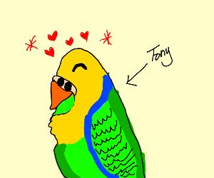 happy parakeet named tony