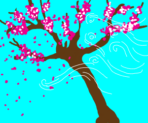 wind hitting sakura tree