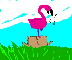 Flamingo sings on a box