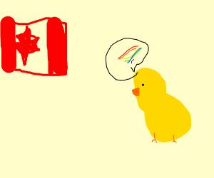Duck calling Canada gay.
