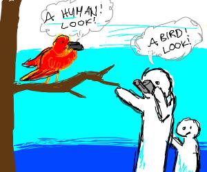 Bird watching goes both ways