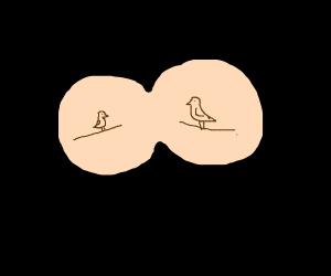 Bird watching through binoculars