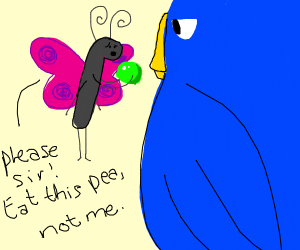 butterfly giving blue bird a pea
