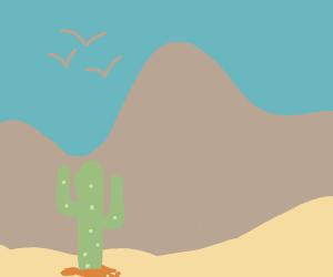 mexican cactus in desert