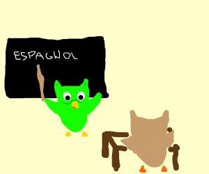 Duolingo teaches brown owl spanish