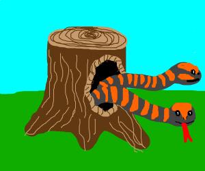 snakes in tree stump