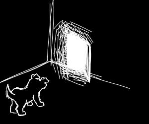 Tiny dog in dark room