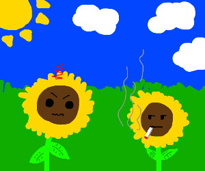 flower is mad at other flower for smoking