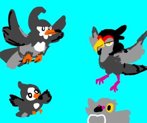 grey birds