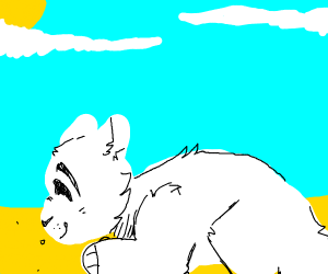 a cat laying on the sand