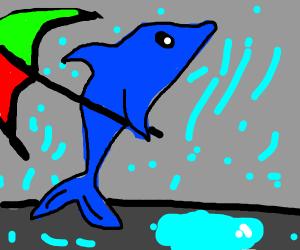 Dolphin Walking in the Rain