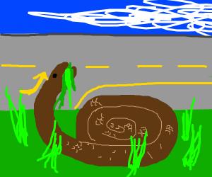 a snake eating grass