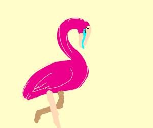 sad flamengo