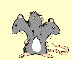 Cute rat amalgamate