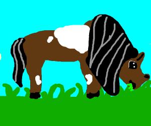 Horse eats grass