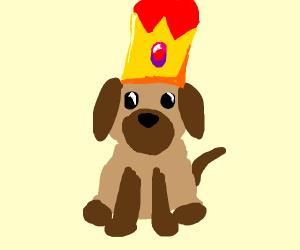 King Puppy