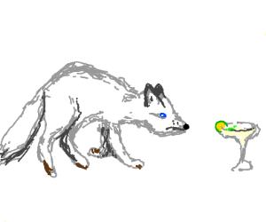 arctic fox hunts margarita